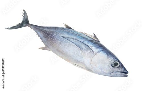 Fresh raw albacore tuna fish isolated on white background Canvas Print