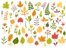 Autumn Leaves And Berries Set, Hand Drawn Style, Vector Illustration