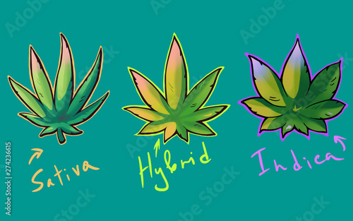 Leinwand Poster  Cannabis sativa, indica and hybrid leaves in graffiti style