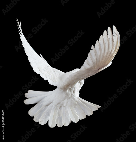 Fotografía  Flying white doves on a black background