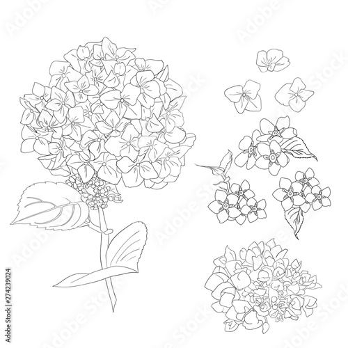 Fotomural Bouquet of hydrangea flowers with leaves