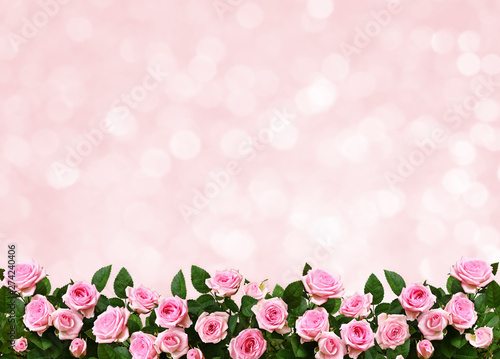 Holiday background with pink rose flowers
