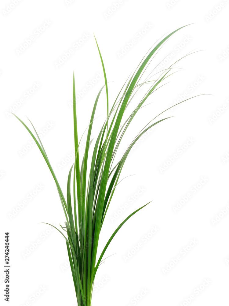 Fototapety, obrazy: Fresh green grass.