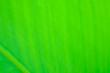 Leinwandbild Motiv tropical leaf texture nature green background.