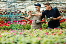 Two Male Florist Cooperating While Examining Flowers In A Plant Nursery.