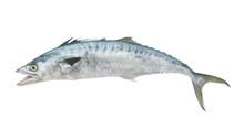 Fresh King Mackerel Fish Isolated On White