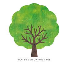 水彩の大木2