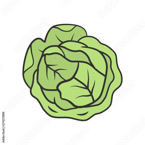 Fotografija Cabbage color icon