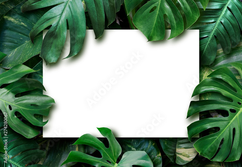 Tropical leaves and blank white paper background