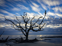 Beautiful Color Image Of Driftwood Trees Along The Shore Of Driftwood Beach In Jekyll Island, Georgia.