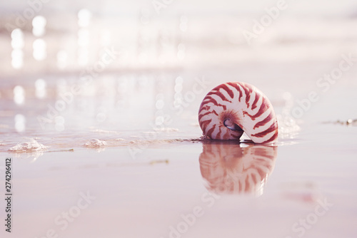 Fotografie, Obraz  British summer  beach with nautilus pompilius sea shell