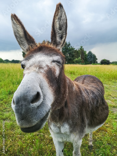 friendly twinkle of a donkey