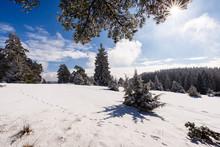 Schneewalzer - Premium-Wanderweg, Albstadt, Baden-W¸rttemberg, Germany: The Beautiful Winter Scenery On A Sunny Day As Seen Along The Premium Winter Hiking Trail.