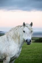 Portrait Of Horse Standing In Grassy Field
