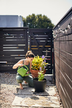 Woman Watering Flowering Plant By Fence At Backyard