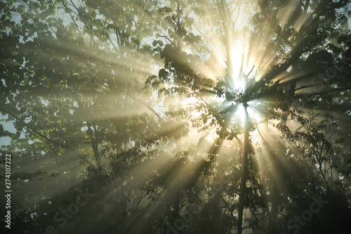 Montage in der Fensternische Khaki Beautiful sun rays break through the fog shining through the trees