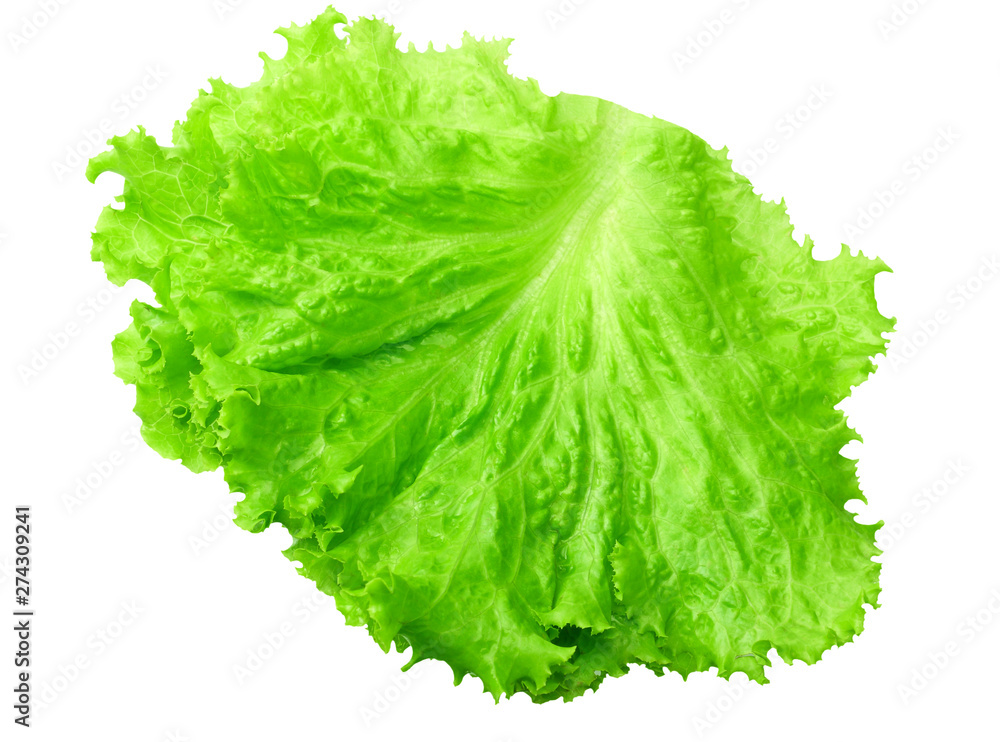 Fototapety, obrazy: one salad leaf isolated on a white background