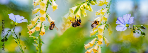 Fotografia bumblebees on flowers in the garden close up