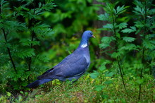 Lato W Przyrodzie ,młode Ptak...