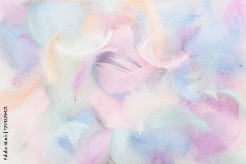 Fototapety, obrazy: abstract nackground with soft colorfull feathers. Flat lay