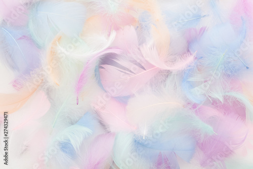 Fotografie, Obraz  abstract nackground with soft colorfull feathers. Flat lay