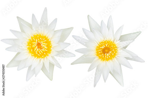 Poster de jardin Nénuphars Beautiful White lotus flower bouquet isolated on the white background. Photo with clipping path..