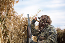 The Hunter Hides In The Reeds And Lures The Ducks