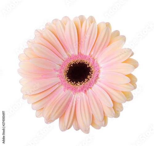 Canvastavla  Gerbera  flower  isolated on white background.