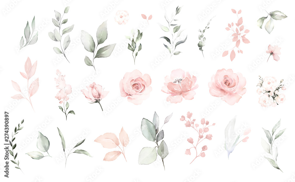 Fototapeta Set watercolor elements of pink roses; collection garden flowers; leaves; branches. Botanic; illustration, eucalyptus; Wedding floral design