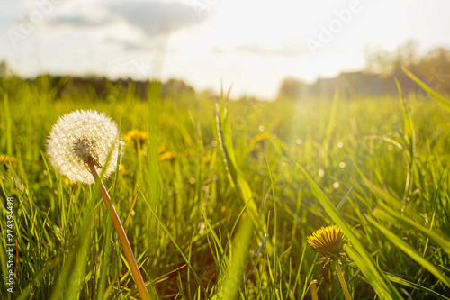 Spoed Foto op Canvas Paardenbloem Silhouette of a dandelion in closeup against sun and sky during the dawn or sunset, creating a meditative summer zen concept background