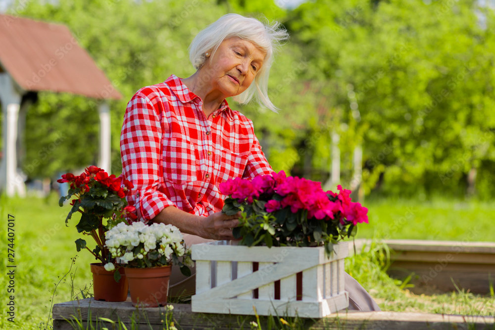 Fototapety, obrazy: Beautiful retired woman living in cottage house looking at her flowers