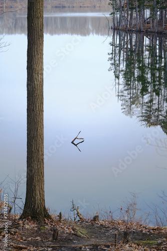 Fototapeta  Trees and a Lake