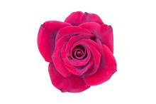 One Beautiful Whole Blossom He...