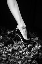 Female Legs Concept. Black Sho...