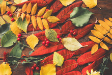 Autumn Foliage. Collection Of ...