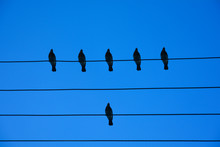 Birds On The Wire. Birds On A Wire On A Background Of Blue Sky. The Concept Of Teams And Teamwork, Not Like Everyone Else, And A Hierarchy Different From Others.