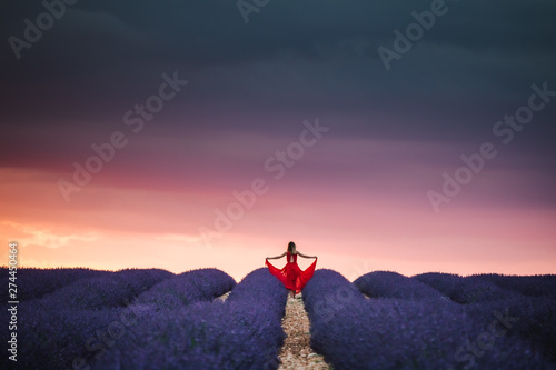 Foto auf AluDibond Rosa hell Lavender fields in Provence France ladnscape pretty hot summer