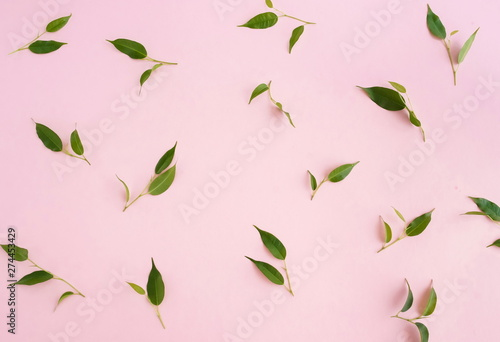 Green ficus leaves pattern isolated on pink background top view - 274453429