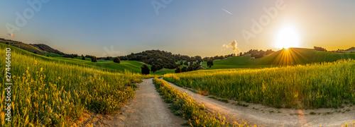 Panorámica de un campo de cultivo de cereal al atardecer.