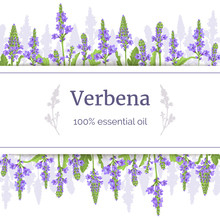 Verbena Plant Card Template Wi...