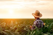 canvas print picture -  Rear view of senior farmer standing in corn field examining crop at sunset.