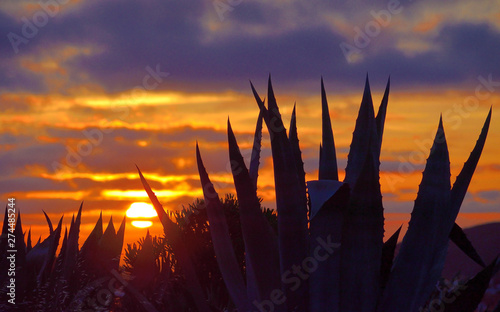 Spoed Foto op Canvas Aubergine Backlit agave plants in foreground and covered sky with sun among clouds at dawn