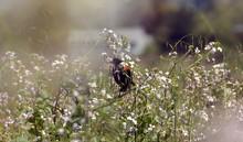 Black Bird On Flower-East Bay ...