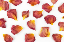 Flower Background. Dry Petals ...