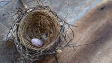Bird Egg In The Nest