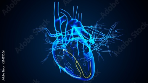 Obraz na płótnie 3D Illustration of Human Body Organs Heart Anatomy