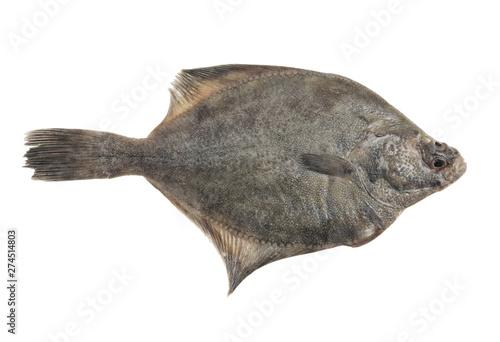 Fotografie, Tablou Flatfish or plaice fish isolated on white background