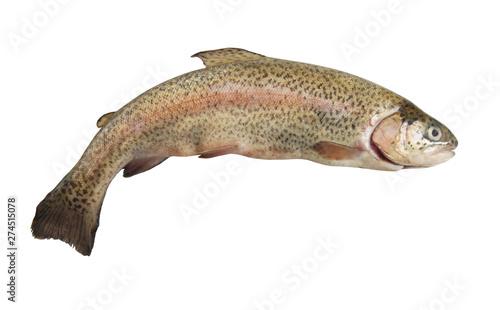 Fotografie, Obraz Rainbow trout isolated on white