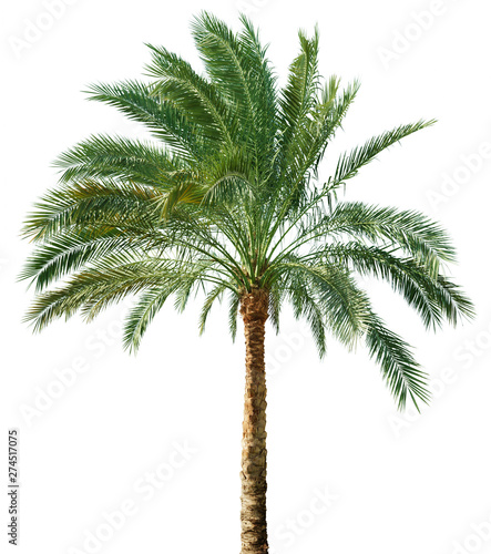 Photo sur Aluminium Arbre Palm tree isolated