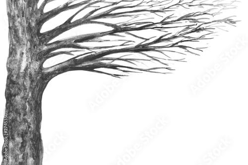 Fotografia  albero acquerello sfondo bianco
